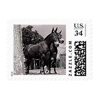Missouri Mule Postage