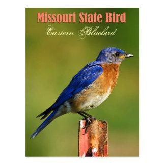 Missouri State Bird - Eastern Bluebird Postcard