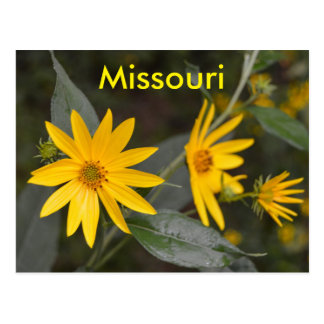 Missouri Yellow Wildflowers Postcard