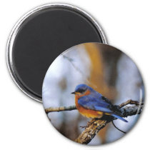 Missouris Bird Magnet