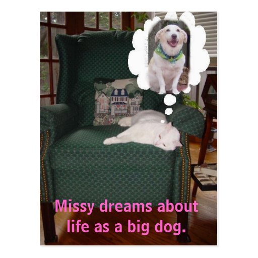 Missy dreams about life as a big dog. post card