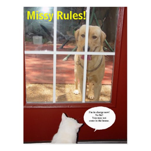 Missy Rules! Post Card