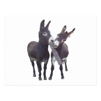 """Missy's Donkeys"" Horizontal Postcard"