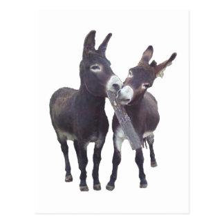 """Missy's Donkeys"" Vertical Postcard"