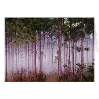 Mist among pine trees at sunrise, Everglades Card