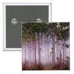 Mist among pine trees at sunrise, Everglades Pin