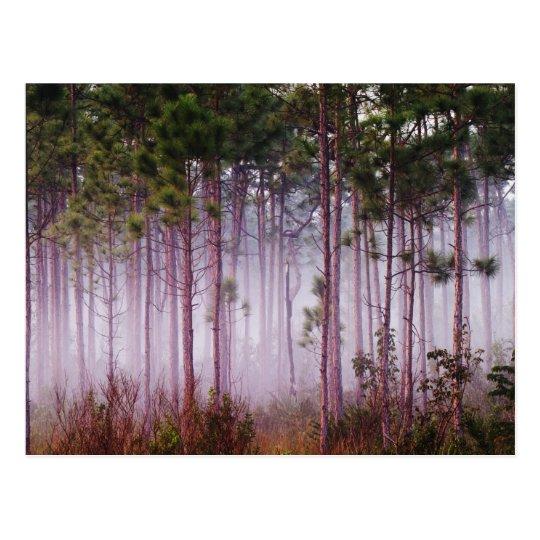 Mist among pine trees at sunrise, Everglades Postcard