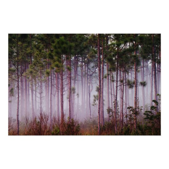 Mist among pine trees at sunrise, Everglades Poster
