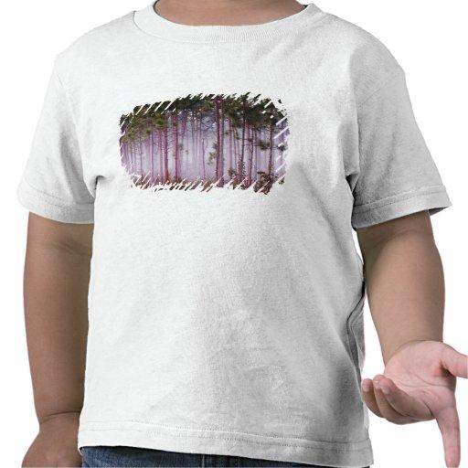 Mist among pine trees at sunrise, Everglades T-shirts