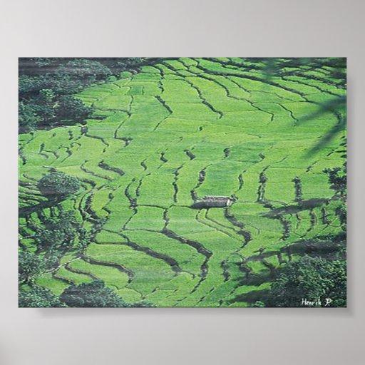 Mist on Rice Paddys Poster