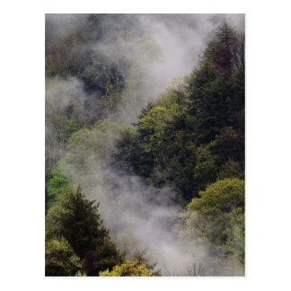 Mist rising from mountainside after spring rain, postcard