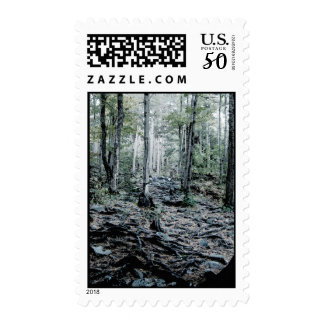 Misted Birch Forest Postage
