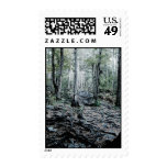 Misted Birch Forest Postage Stamp