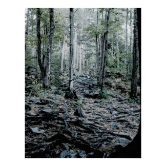 Misted Birch Forest Print