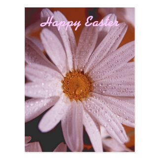Misted Daisy Happy Easter Postcard
