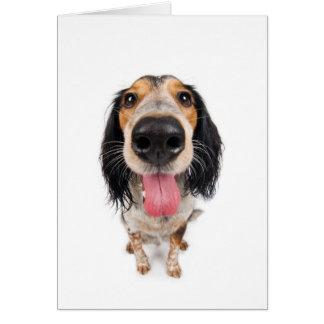 Mister dog greeting card