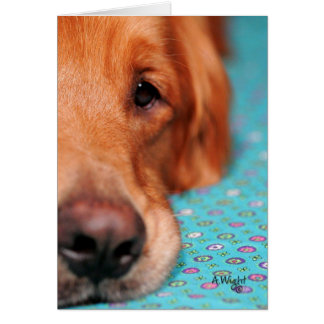 Mister Farley, the Golden Retriever Greeting Card