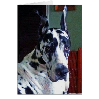 'Mister' Great Dane Greeting Card