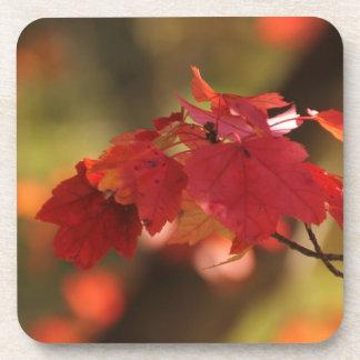 Misterios del otoño posavasos de bebida