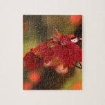 Misterios del otoño puzzles con fotos