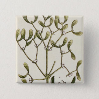 Mistletoe from 'A Curious Herbal', 1782 Button