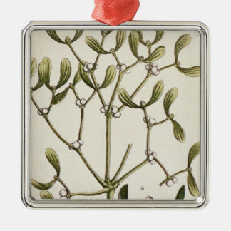 Mistletoe from 'A Curious Herbal', 1782 Square Metal Christmas Ornament