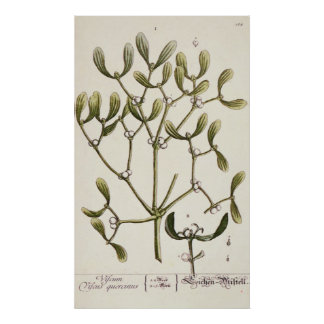 Mistletoe from 'A Curious Herbal', 1782 Poster