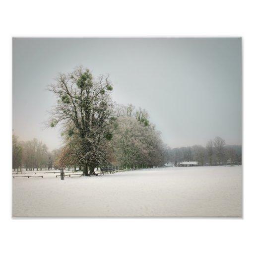 Mistletoe Tree Photo Print