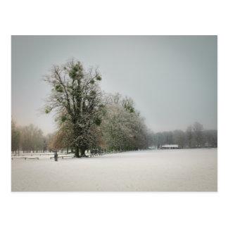 Mistletoe Tree Postcard