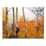 Misty Autumn Aspen Postcards