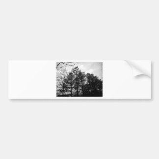 Misty Ethereal  Haunted Trees Forest Woods Fog Bumper Sticker