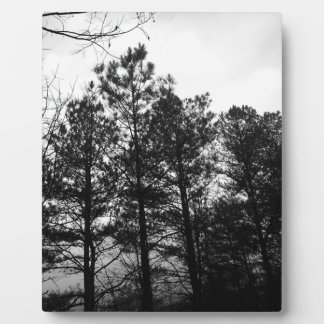 Misty Ethereal  Haunted Trees Forest Woods Fog Plaque