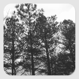 Misty Ethereal  Haunted Trees Forest Woods Fog Square Sticker