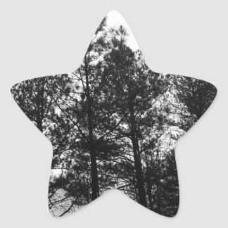 Misty Ethereal  Haunted Trees Forest Woods Fog Star Sticker