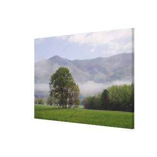 Misty meadow and Rich Mountain, Cades Cove, Canvas Print
