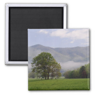 Misty meadow and Rich Mountain, Cades Cove, Magnet