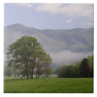 Misty meadow and Rich Mountain, Cades Cove, Tile