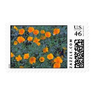 Misty Orange Stamps