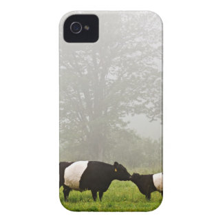 Misty scene of belted galloway cow mothering her iPhone 4 cover