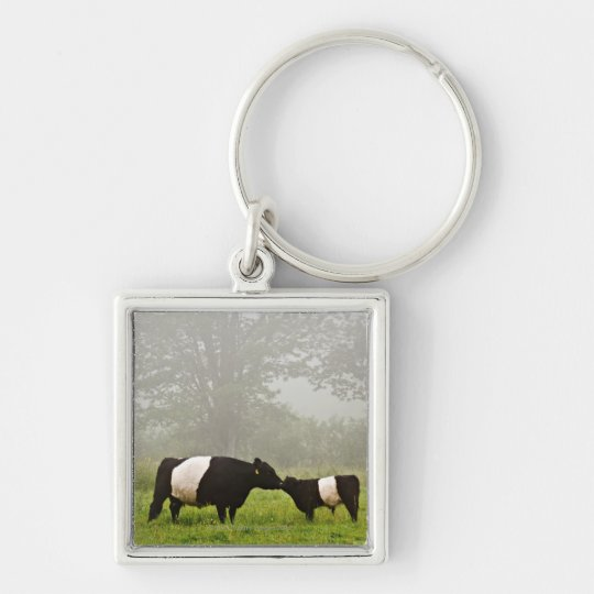 Misty scene of belted galloway cow mothering her keychain