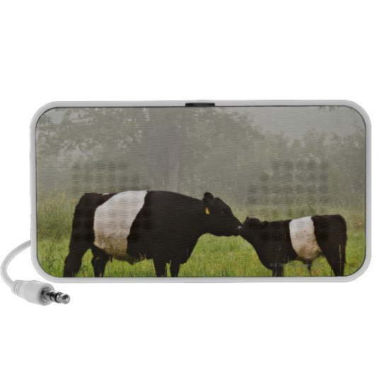 Misty scene of belted galloway cow mothering her portable speaker