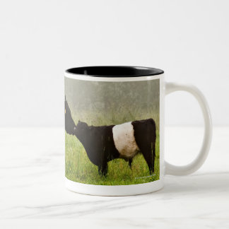 Misty scene of belted galloway cow mothering her Two-Tone coffee mug