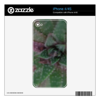 Misty Succulent, Green Purple, Nature, Flora Plant Skin For The iPhone 4S
