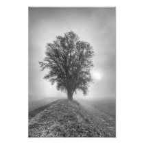 Misty Sunrise Photo Print