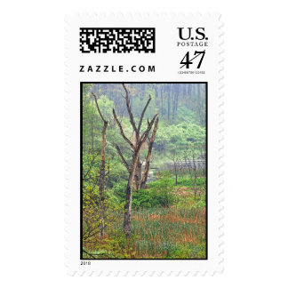 Misty Swamp Card Postage