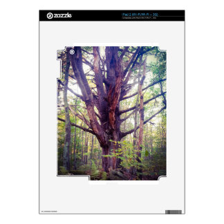 Misty Tree Decal For iPad 2
