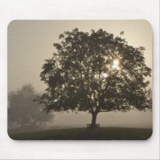 Misty Trees Mouse Pad