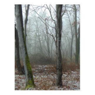 Misty Wood Postcard
