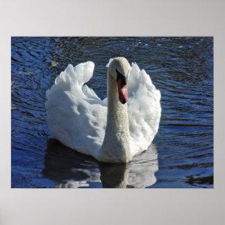Misunderstood Swan Print