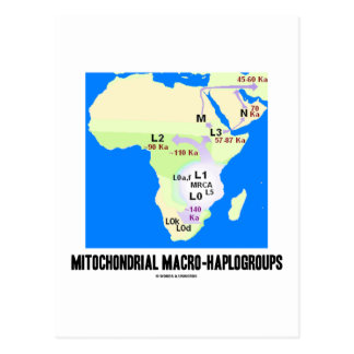 Mitochondrial Macro-Haplogroups (MRCA Genealogy) Postcard
